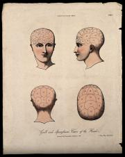 """Farvet litografi af C. Ingfrey til Encyclopædia Londinensis, 1824, med teksten """"Gall and Spurzheim's views of the head.""""  . Illustration: The Wellcome Library"""