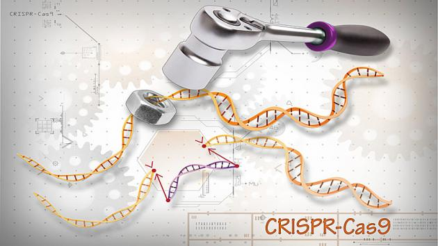 Illustration: Ernesto del Aguila III, National Human Genome Research Institute, National Institutes of Health