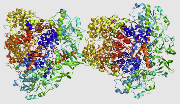 DYPD protein struktur (Emw, CC BY-SA 3.0 , via Wikimedia Commons)